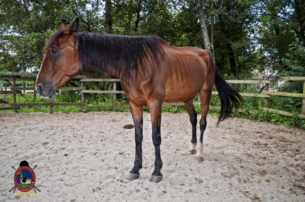 Troco_OsParrulos_caballos_7
