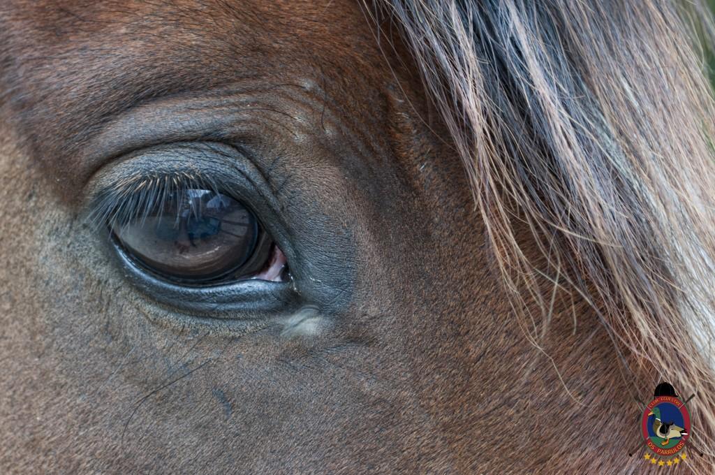 Troco_OsParrulos_caballos_8