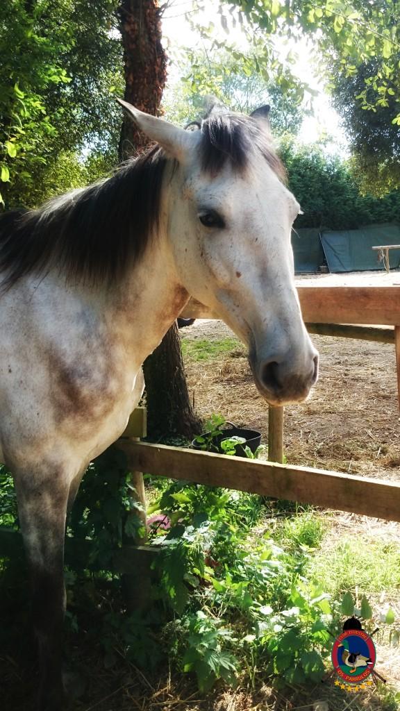 Os Parrulos_montar a caballo_Lyra_12