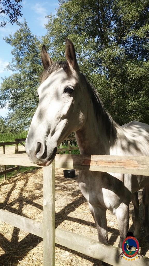 Os Parrulos_montar a caballo_Lyra_13