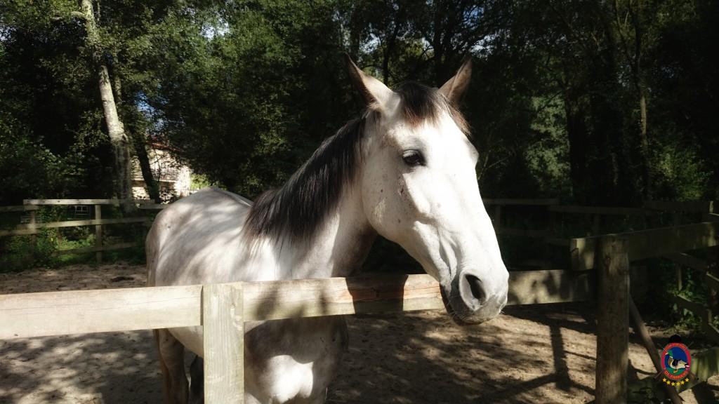 Os Parrulos_montar a caballo_Lyra_14