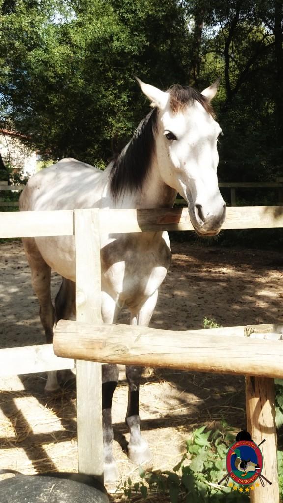 Os Parrulos_montar a caballo_Lyra_15