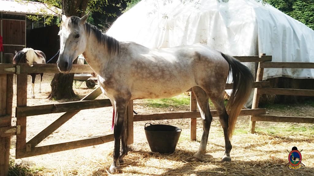 Os Parrulos_montar a caballo_Lyra_16