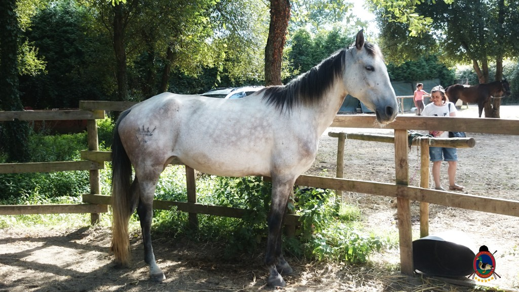 Os Parrulos_montar a caballo_Lyra_17