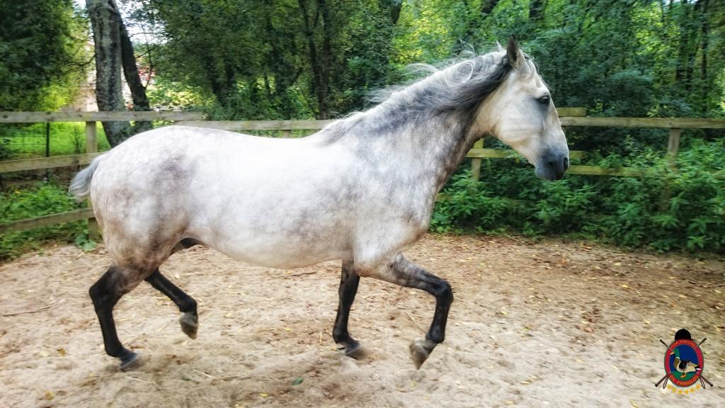 colino_Os Parrulos_caballos_montar a caballo_881