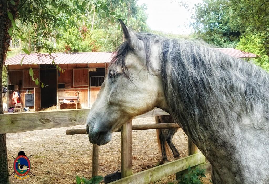 colino_Os Parrulos_caballos_montar a caballo_8810
