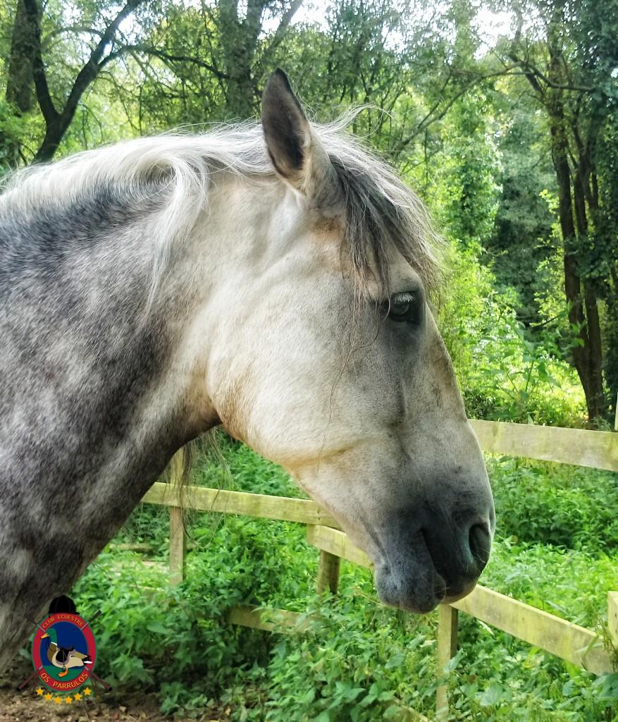 colino_Os Parrulos_caballos_montar a caballo_8811