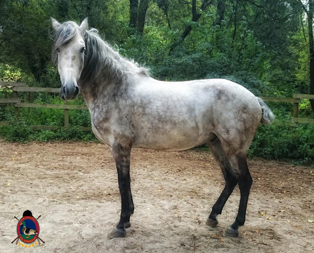colino_Os Parrulos_caballos_montar a caballo_8812