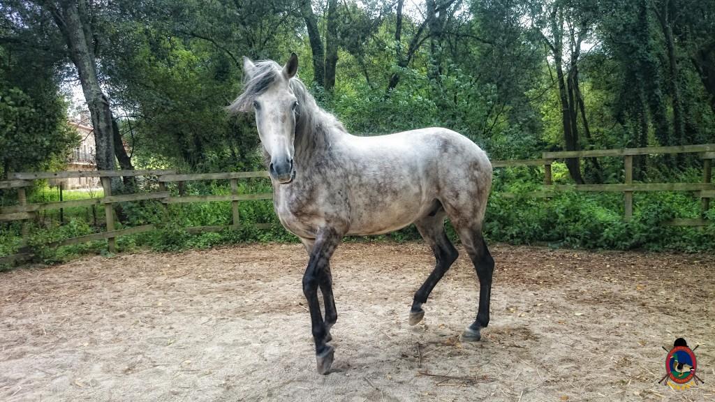 colino_Os Parrulos_caballos_montar a caballo_8813