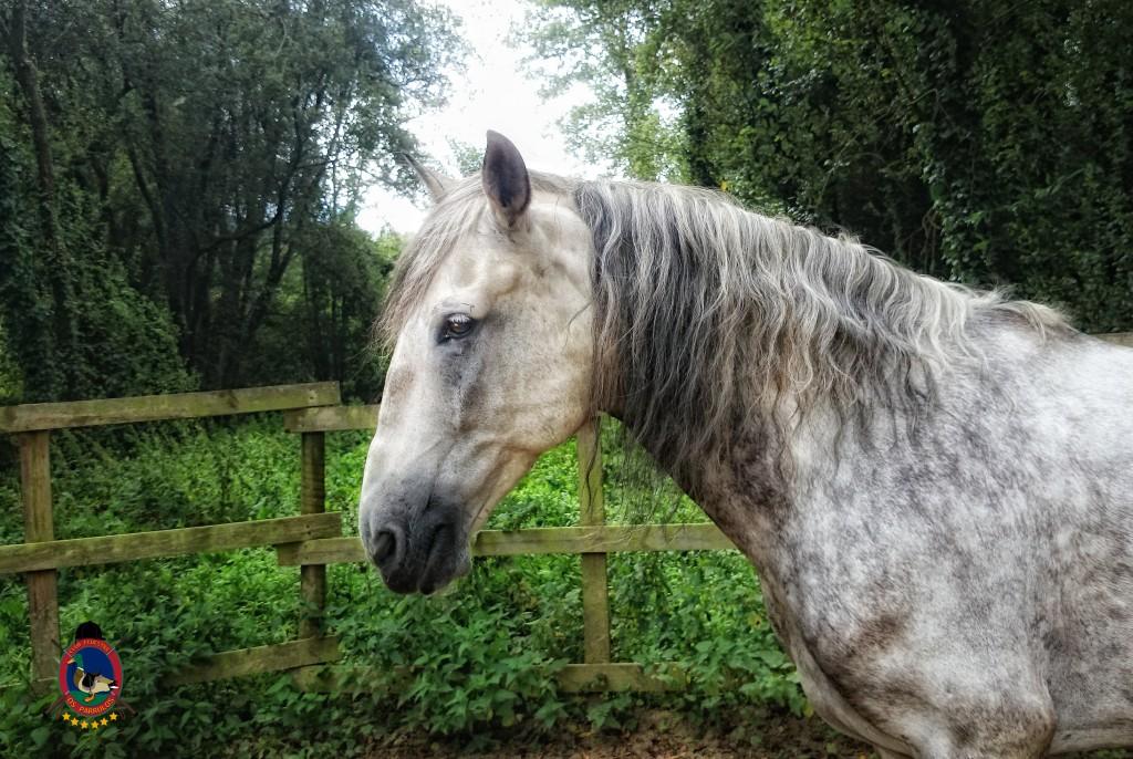colino_Os Parrulos_caballos_montar a caballo_8814