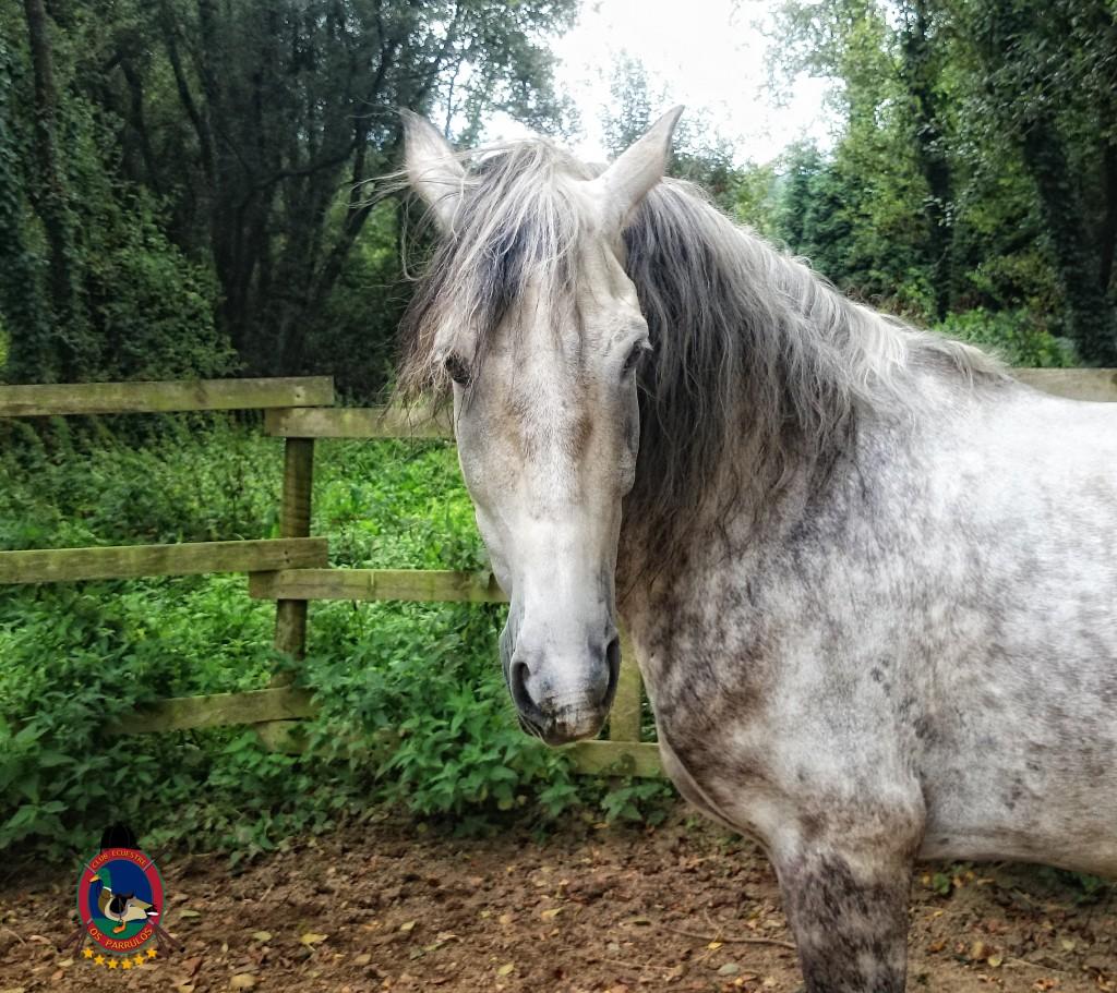 colino_Os Parrulos_caballos_montar a caballo_8816
