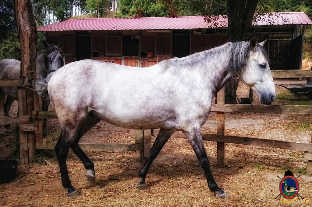 colino_Os Parrulos_caballos_montar a caballo_882
