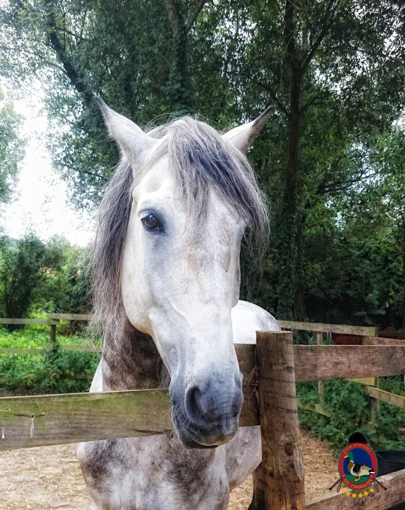 colino_Os Parrulos_caballos_montar a caballo_886