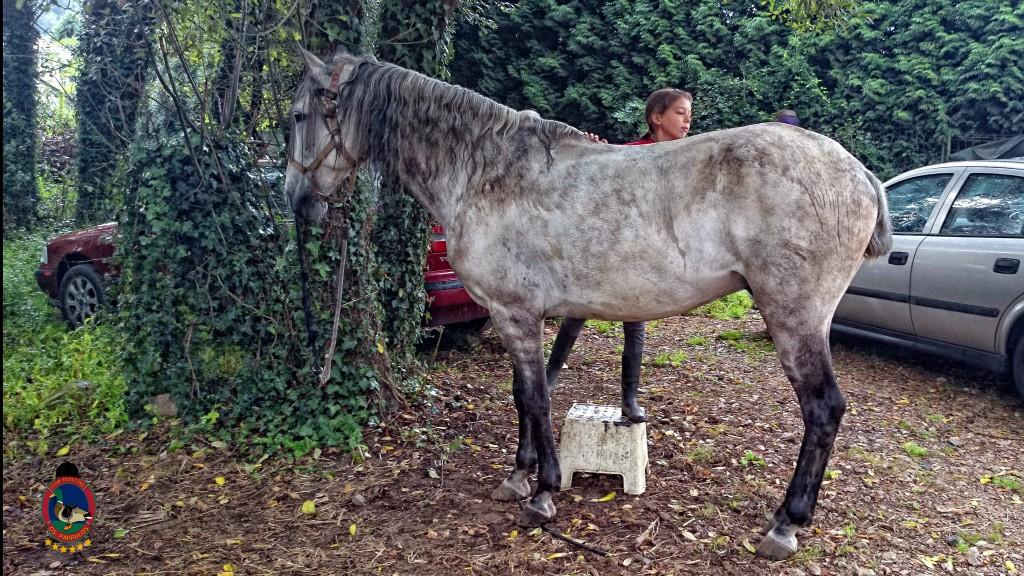 clases de equitación_La Coruña_Os Parrulos_16