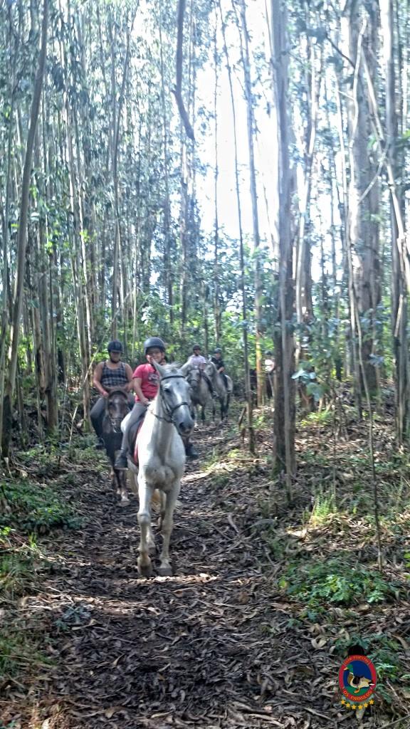 clases de equitación_La Coruña_Os Parrulos_6