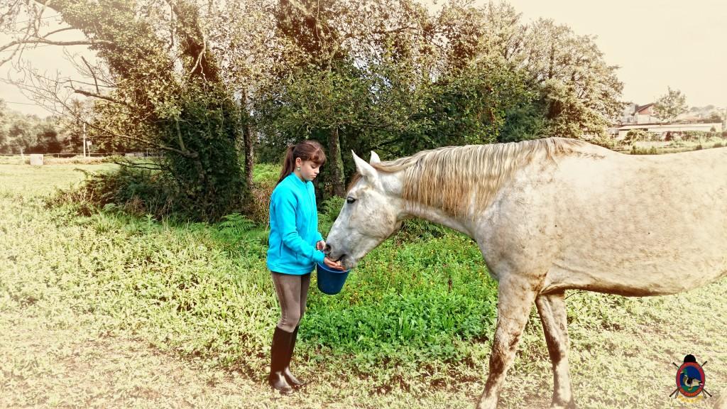 Os Parrulos_caballos_hípica La Coruña_001