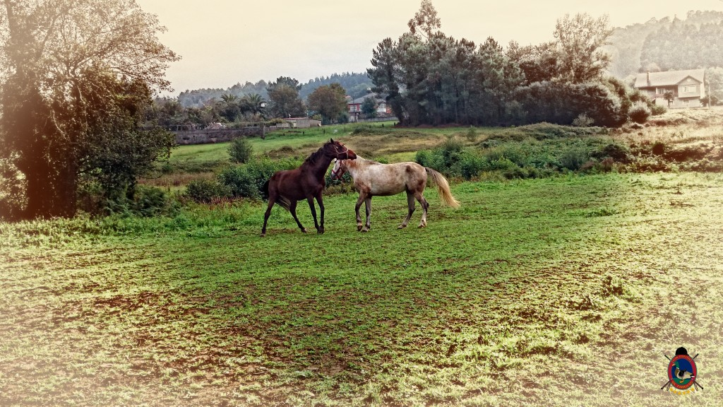 Os Parrulos_caballos_hípica La Coruña_0010