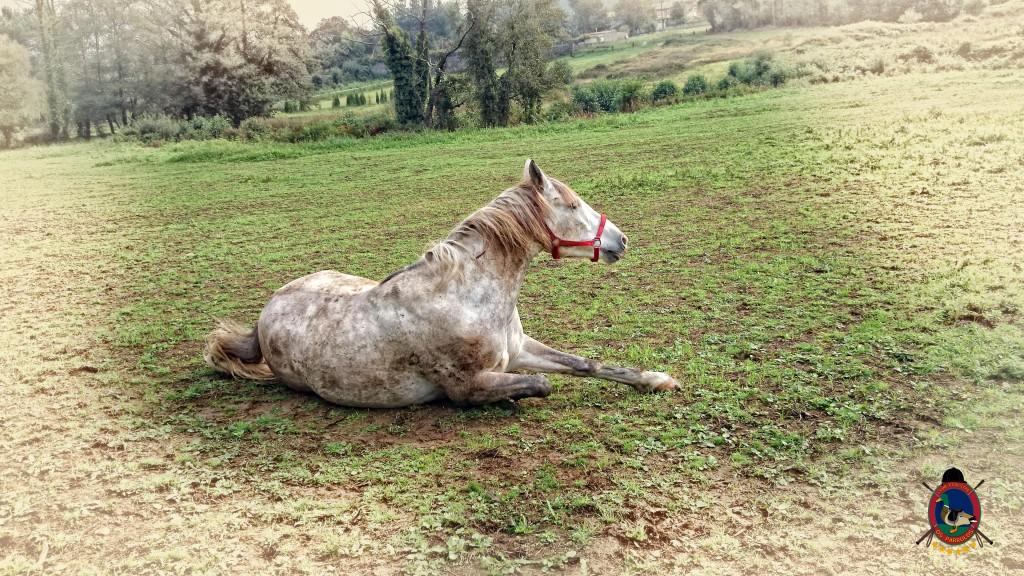 Os Parrulos_caballos_hípica La Coruña_0011