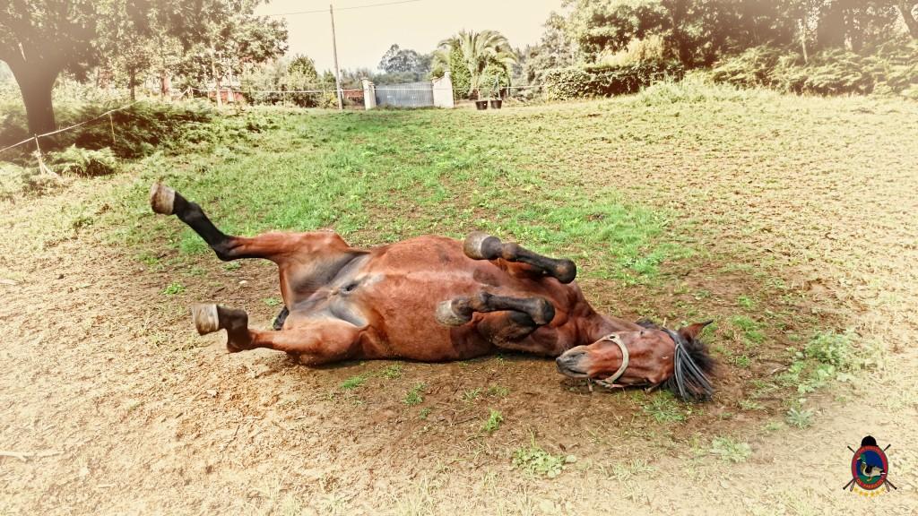 Os Parrulos_caballos_hípica La Coruña_0014