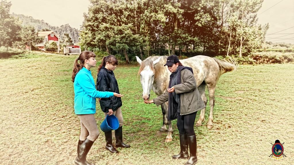 Os Parrulos_caballos_hípica La Coruña_002