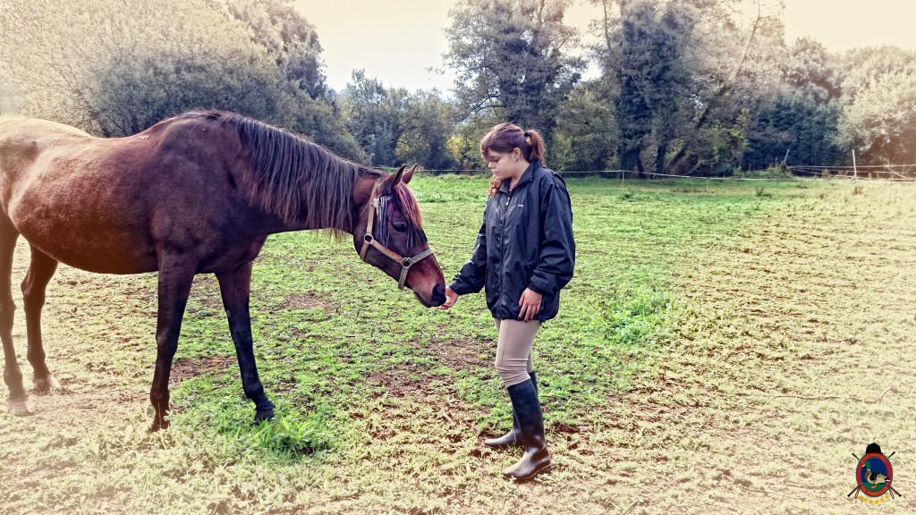 Os Parrulos_caballos_hípica La Coruña_003