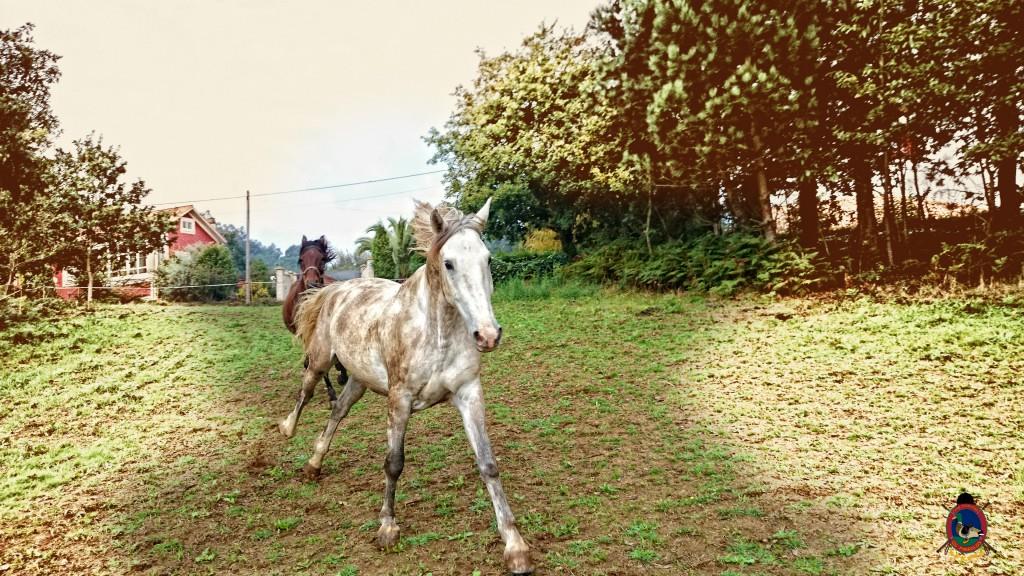 Os Parrulos_caballos_hípica La Coruña_004