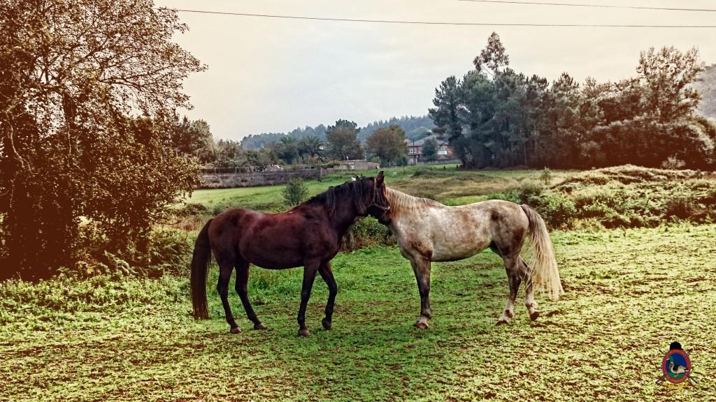Os Parrulos_caballos_hípica La Coruña_007