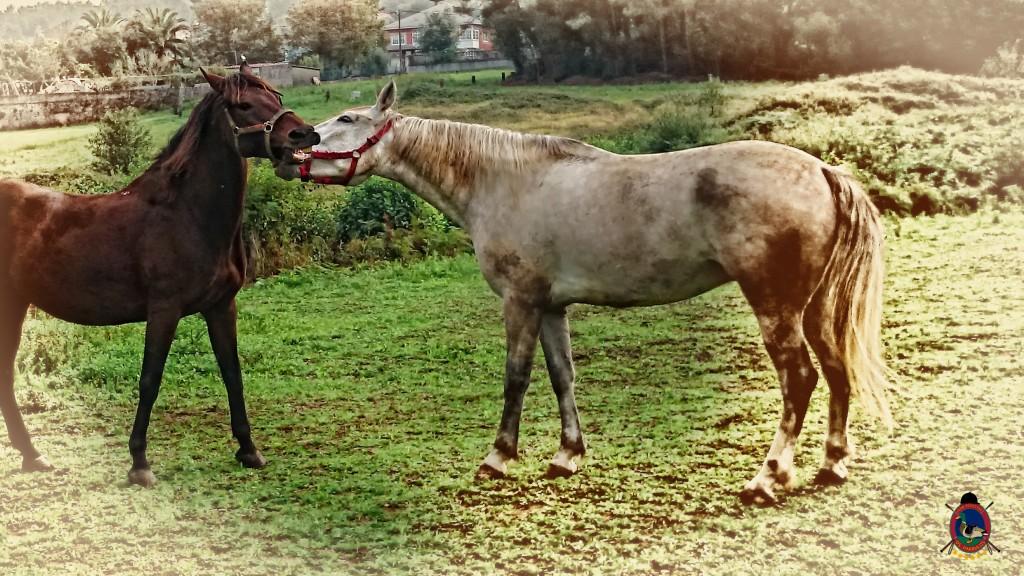 Os Parrulos_caballos_hípica La Coruña_008