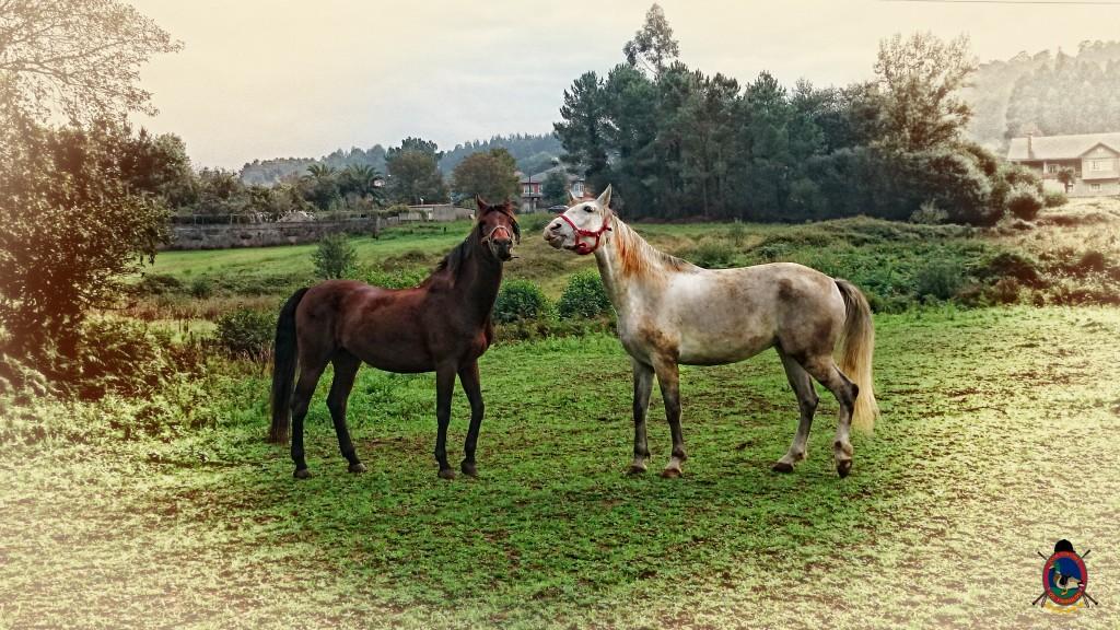 Os Parrulos_caballos_hípica La Coruña_009