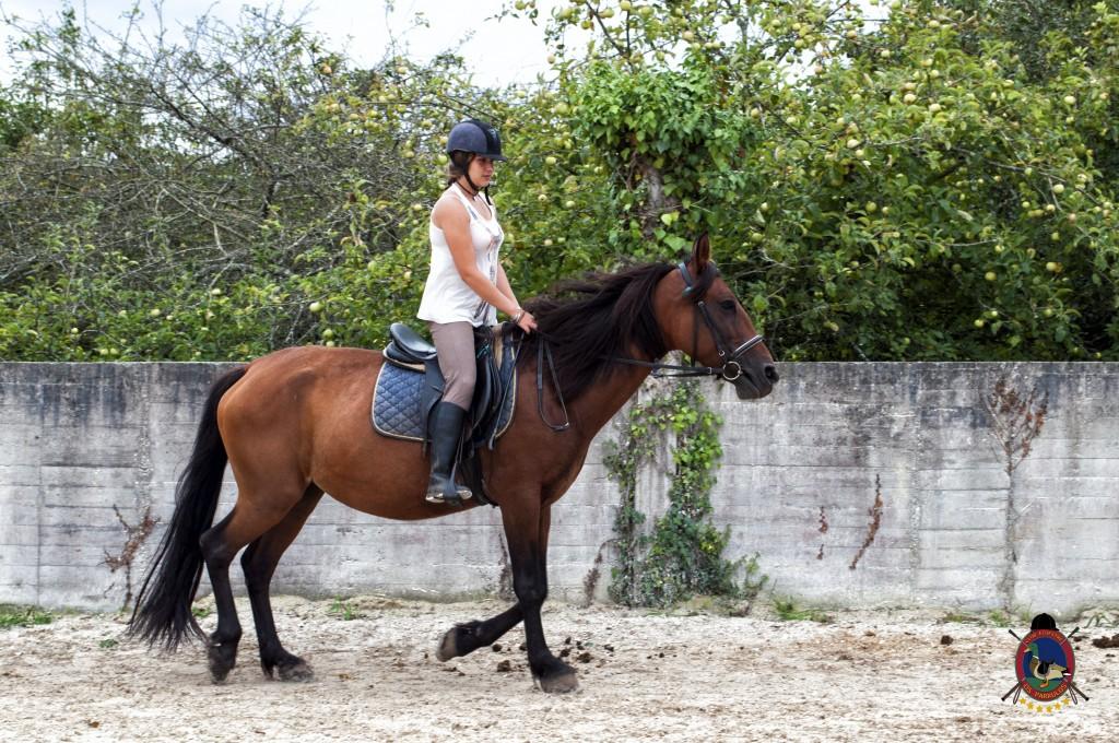 Os Parrulos_Clases de equitación_hípica La Coruña_caballos_x1