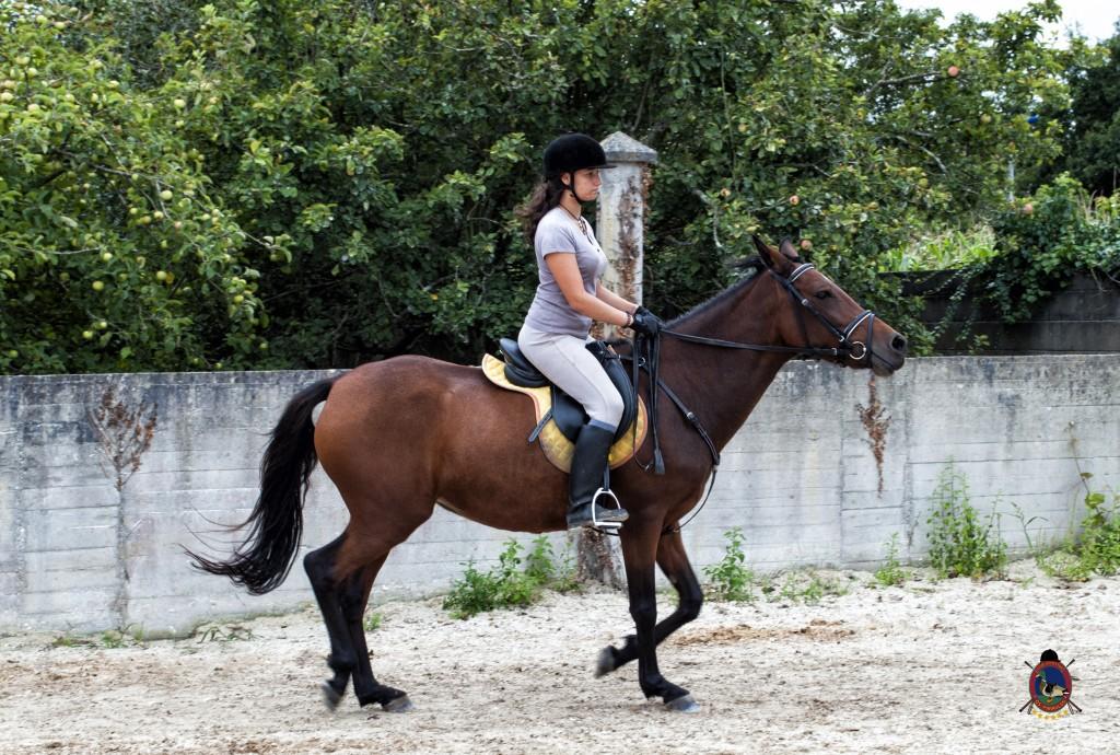 Os Parrulos_Clases de equitación_hípica La Coruña_caballos_x2
