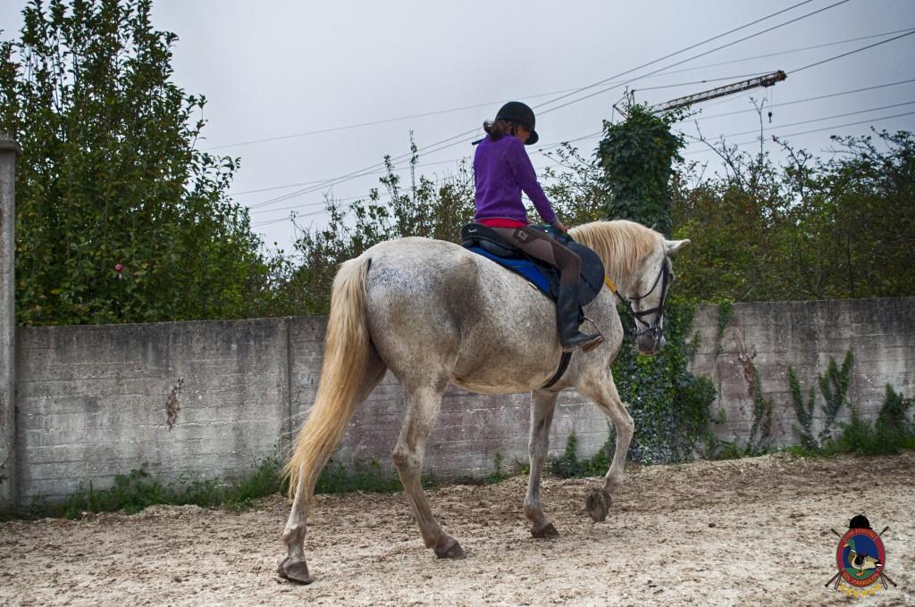 Os Parrulos_clases de equitación_clases de salto_hipica La Coruña_T11