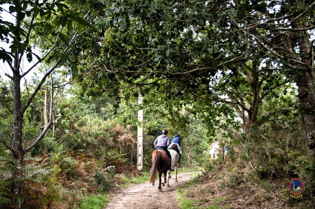 Os Parrulos_rutas a caballo_clases de equitación_hipica La Coruña_T25