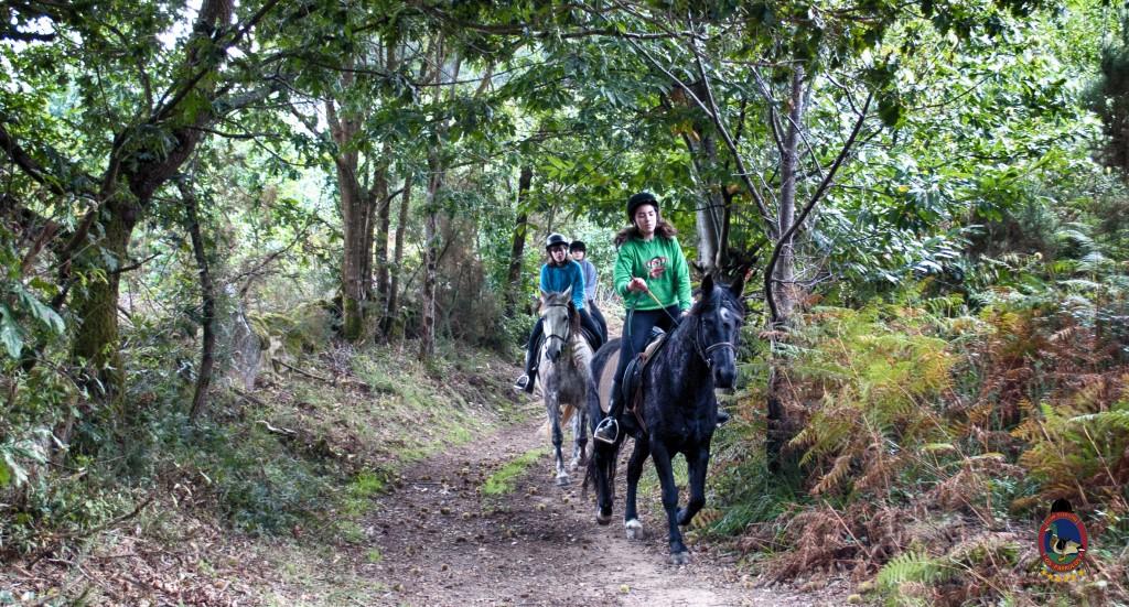 Os Parrulos_rutas a caballo_clases de equitación_hipica La Coruña_T26