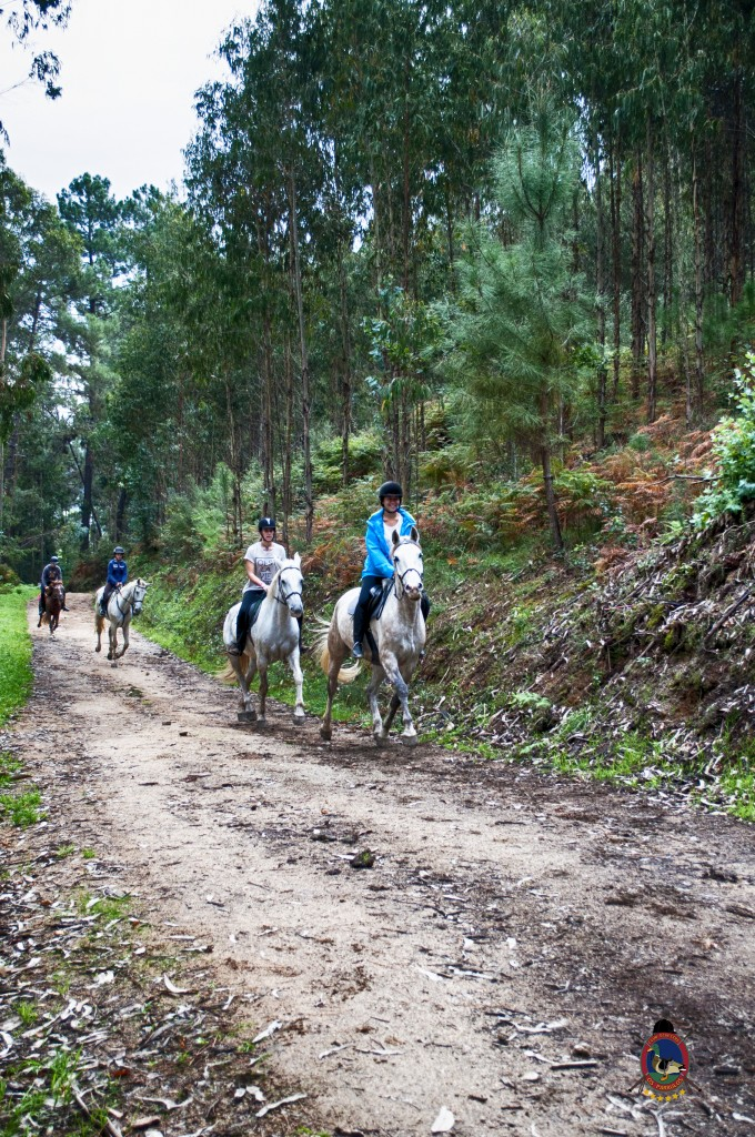 Os Parrulos_rutas a caballo_clases de equitación_hipica La Coruña_T4