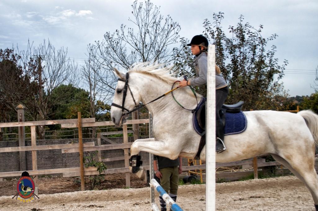 clases de salto_hipica la coruña_Os parrulos_equitación_s12