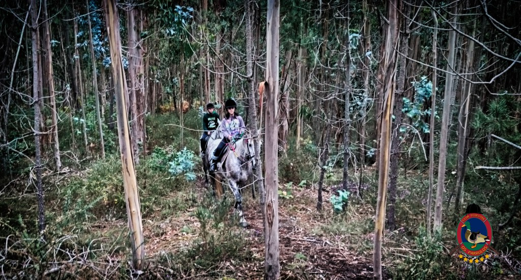 Os Parrulos_rutas a caballo _clases de equitación_hípica la coruña_R5