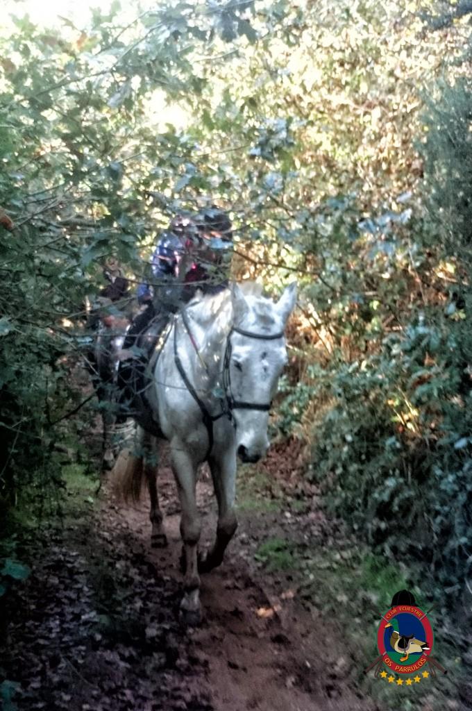 Os Parrulos_Clases de equitación_hípica La Coruña_cl11