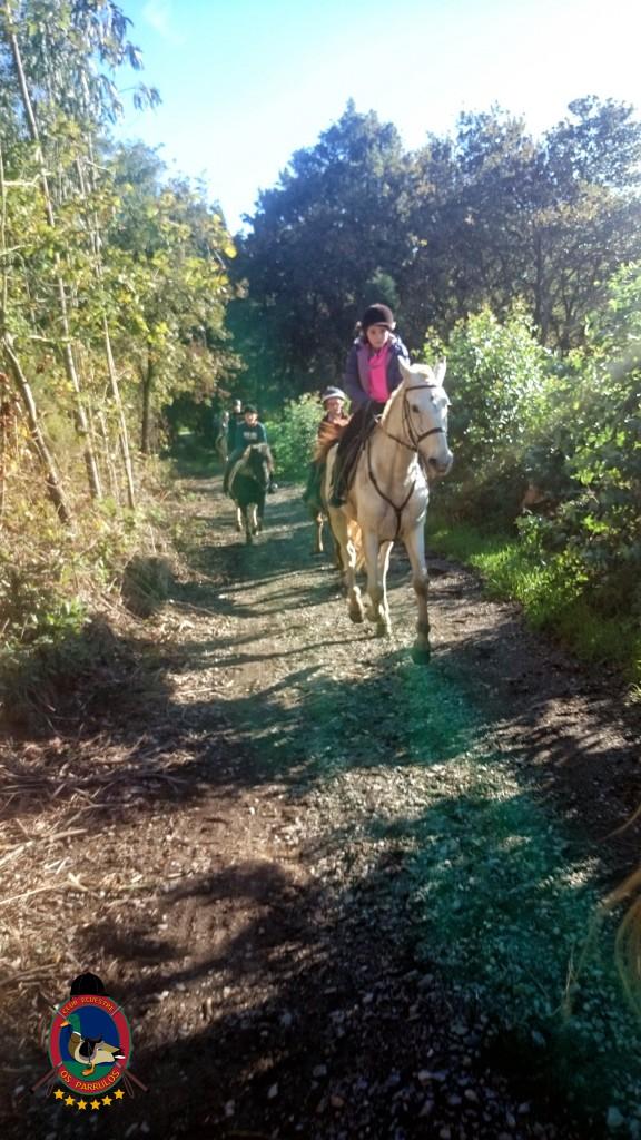 Os Parrulos_Clases de equitación_hípica La Coruña_cl20