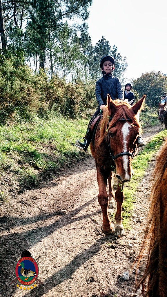 Os Parrulos_Hipica La Coruña_clases de equitación_cl6