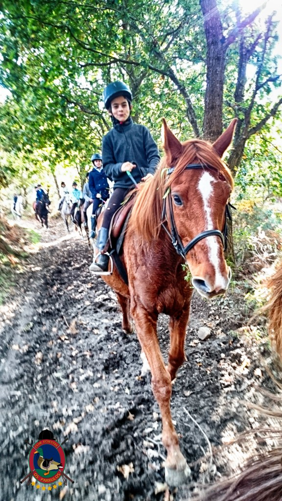 Os Parrulos_Hipica La Coruña_clases de equitación_cl8