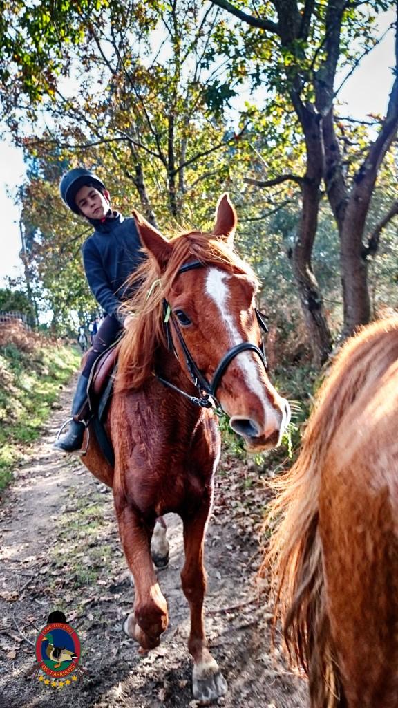 Os Parrulos_Hipica La Coruña_clases de equitación_cl9