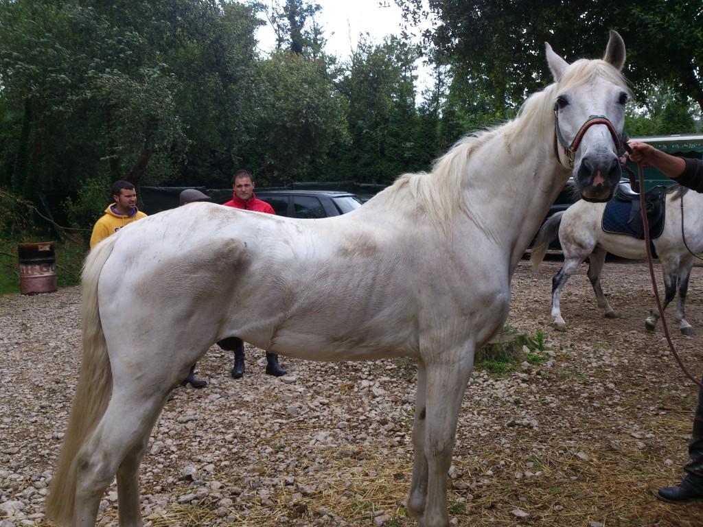 Os Parrulos_Zoura_caballo_01