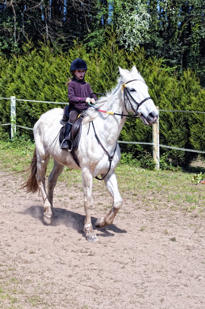 Os Parrulos_Zoura_caballo_012