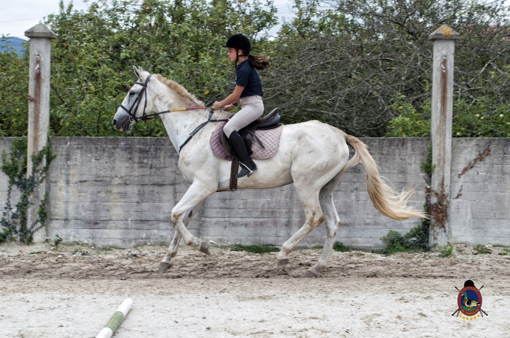 Os Parrulos_Zoura_caballo_015