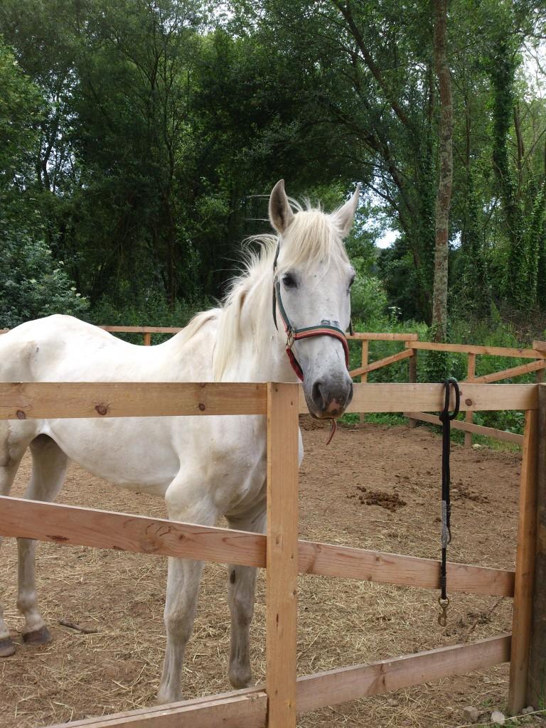 Os Parrulos_Zoura_caballo_03