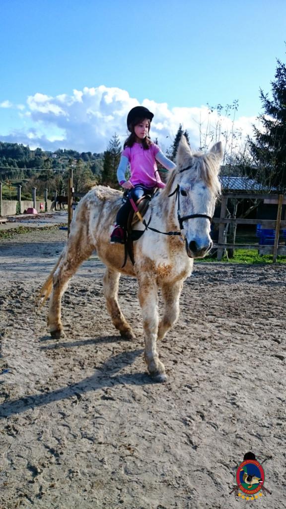 Os Parrulos_hipica La Coruna_clases de equitacion-N15