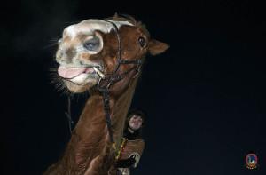 Os parrulos_clases de equitacion_hipica la coruna_HP1