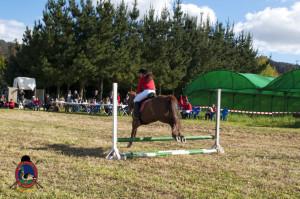 Os Parrulos_mondonedo_hipica_clases equitacion_30