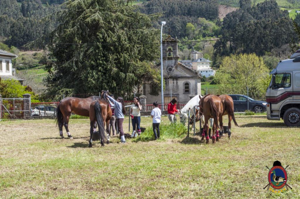 Os Parrulos_mondonedo_hipica_clases equitacion_309